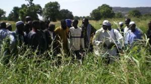 Bauern lernen welche Grassorten für die Kühe am Besten sind.